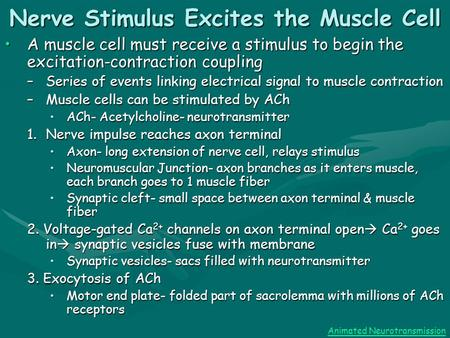 Nerve Stimulus Excites the Muscle Cell A muscle cell must receive a stimulus to begin the excitation-contraction couplingA muscle cell must receive a stimulus.