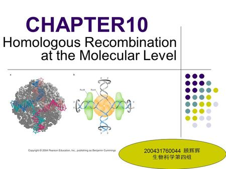 CHAPTER10 Homologous Recombination at the Molecular Level 200431760044 顾辉辉 生物科学第四组.