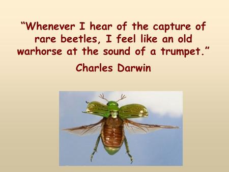 """Whenever I hear of the capture of rare beetles, I feel like an old warhorse at the sound of a trumpet."" Charles Darwin."
