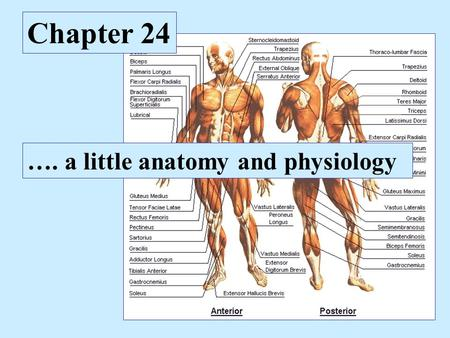Chapter 24 …. a little anatomy and physiology. Levels of organization in the vertebrate body.