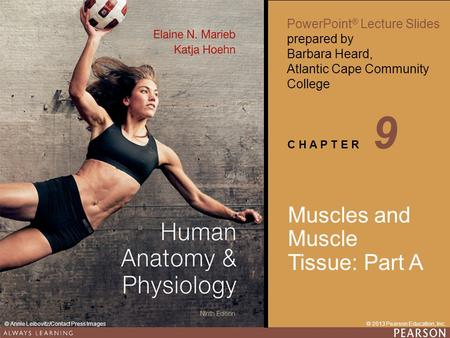 9 Muscles and Muscle Tissue: Part A.