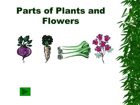 Parts of Plants and Flowers What are four MAJOR parts of plants? Leaf Roots Stem Flower.
