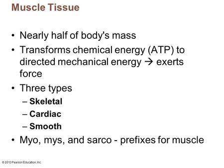 © 2013 Pearson Education, Inc. Muscle Tissue Nearly half of body's mass Transforms chemical energy (ATP) to directed mechanical energy  exerts force Three.