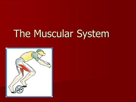 The Muscular System. Muscular System Functions MOVEMENT MOVEMENT Maintain Posture Maintain Posture Stabilize Joints Stabilize Joints Generate HEAT Generate.