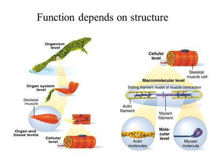 Function depends on structure