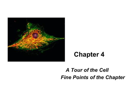Chapter 4 A Tour of the Cell Fine Points of the Chapter.