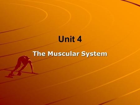 Unit 4 The Muscular System. Muscle Cells There are 3 types of muscle cells – –Cardiac, Smooth, and Skeletal All muscles can contract (shorten) When muscles.