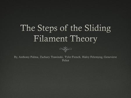 The Steps of the Sliding Filament Theory