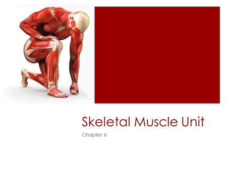 Skeletal Muscle Unit Chapter 6. Functions of skeletal muscles  Produce skeletal movement  Maintain posture and body position  Support soft tissues.