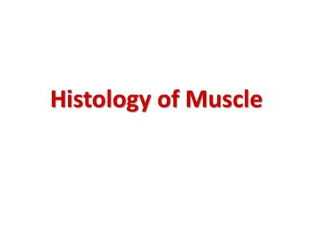 Histology of Muscle.