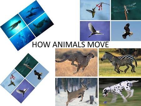 HOW ANIMALS MOVE.