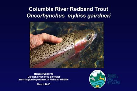 Columbia River Redband Trout Oncorhynchus mykiss gairdneri Randall Osborne District 2 Fisheries Biologist Washington Department of Fish and Wildlife March.