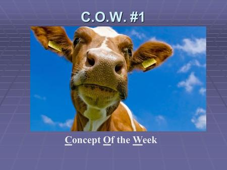 C.O.W. #1 Concept Of the Week. Noun  Our family is planning a vacation in the Rockies.  Person, place, thing, or idea.