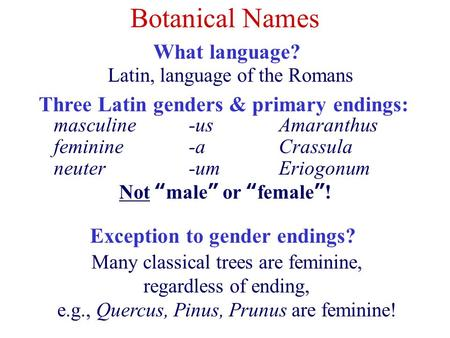 Botanical Names What language? Three Latin genders & primary endings: Many classical trees are feminine, regardless of ending, e.g., Quercus, Pinus, Prunus.
