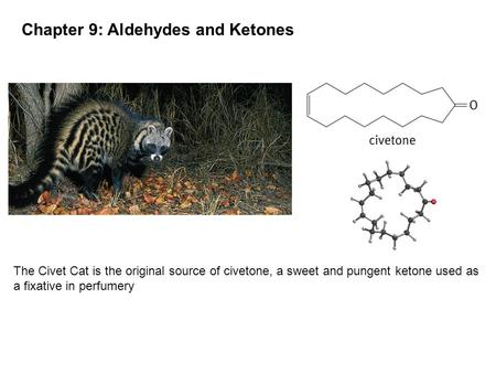 Chapter 9: Aldehydes and Ketones The Civet Cat is the original source of civetone, a sweet and pungent ketone used as a fixative in perfumery.