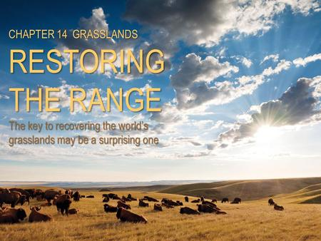 CHAPTER 14 GRASSLANDS RESTORING THE RANGE The key to recovering the world's grasslands may be a surprising one.