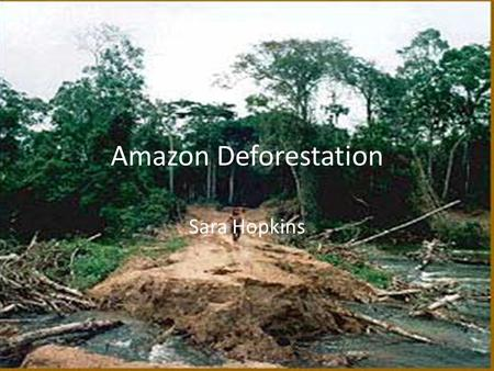 Sara Hopkins Amazon Deforestation. Impact on the environment The fires raging out of control in the Eastern Amazon state of Pará are a powerful symbol.