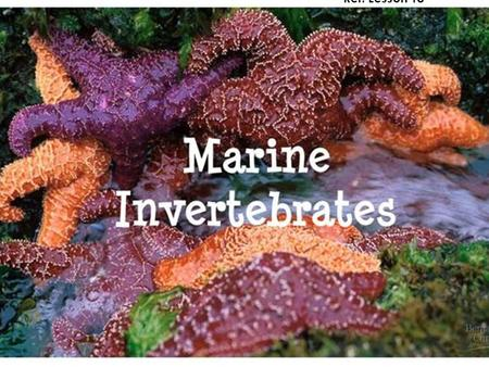 Introduction to Marine Invertebrates