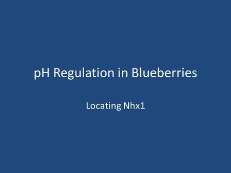 PH Regulation in Blueberries Locating Nhx1. Which proteins regulate pH? The Nhe or Nhx (Na/H exchanger) family of genes – Six known members of this family.