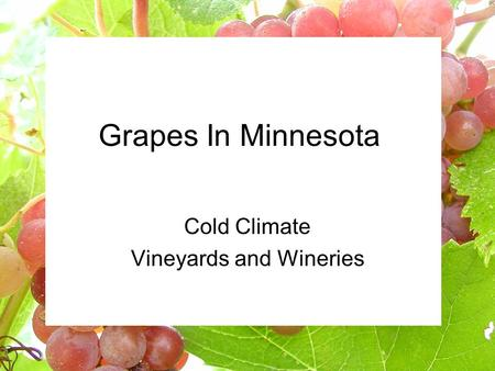 Grapes In Minnesota Cold Climate Vineyards and Wineries.
