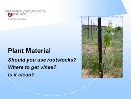 Plant Material Should you use rootstocks? Where to get vines? Is it clean?