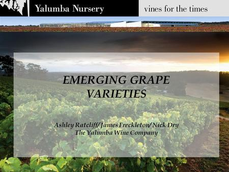 EMERGING GRAPE VARIETIES Ashley Ratcliff/ James Freckleton/ Nick Dry The Yalumba Wine Company.