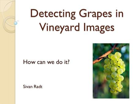 Detecting Grapes in Vineyard Images How can we do it? Sivan Radt.