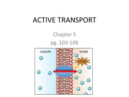 ACTIVE TRANSPORT Chapter 5 pg. 103-106. Active Transport Requires energy! Molecules move from an area of low concentration to an area of high concentration.