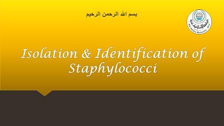 Isolation & Identification of Staphylococci. Staphylococci Characteristics  Staphylococci are often found in the human nasal cavity (and on other mucous.