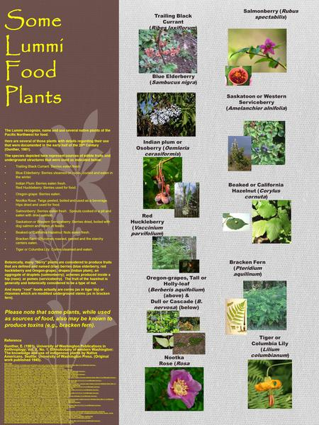 Some Lummi Food Plants The Lummi recognize, name and use several native plants of the Pacific Northwest for food. Here are several of those plants with.