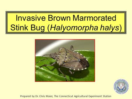 Invasive Brown Marmorated Stink Bug (Halyomorpha halys) Prepared by Dr. Chris Maier, The Connecticut Agricultural Experiment Station.