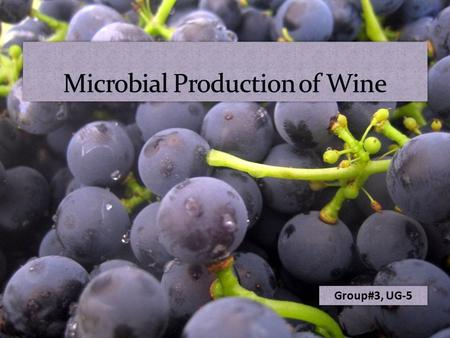 Group#3, UG-5. Wine  Wine is an alcoholic beverage made from the fermentation of grape juice.  Yeast (Saccharomyces cerevisiae) is mostly used for fermentation.