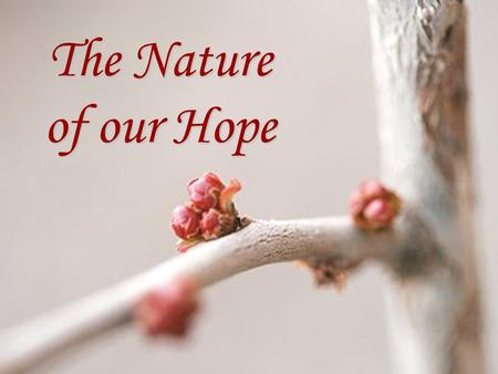 "The Nature of our Hope. Our Hope is a Better Hope It is BETTER than the hope of those who lived under the law of Moses. ""…for the law made nothing perfect;"
