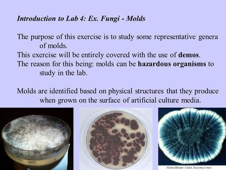 Introduction to Lab 4: Ex. Fungi - Molds