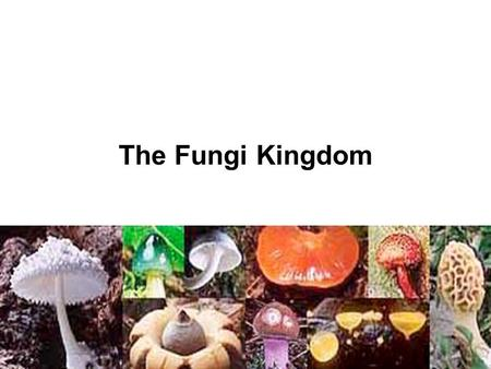 The Fungi Kingdom.