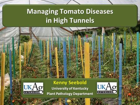 Managing Tomato Diseases in High Tunnels Kenny Seebold University of Kentucky Plant Pathology Department.