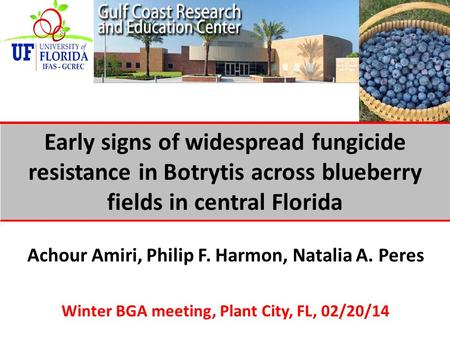 Achour Amiri, Philip F. Harmon, Natalia A. Peres Winter BGA meeting, Plant City, FL, 02/20/14 Early signs of widespread fungicide resistance in Botrytis.