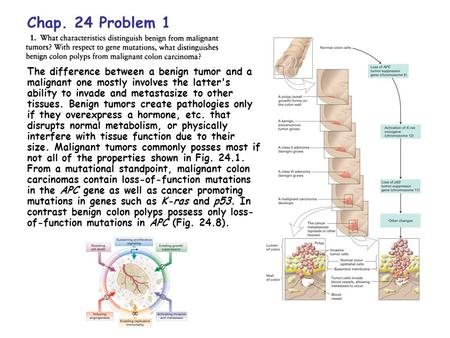 Chap. 24 Problem 1 The difference between a benign tumor and a malignant one mostly involves the latter's ability to invade and metastasize to other tissues.