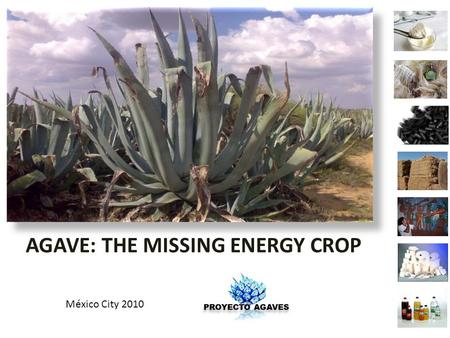 AGAVE AGAVE: THE MISSING ENERGY CROP México City 2010.
