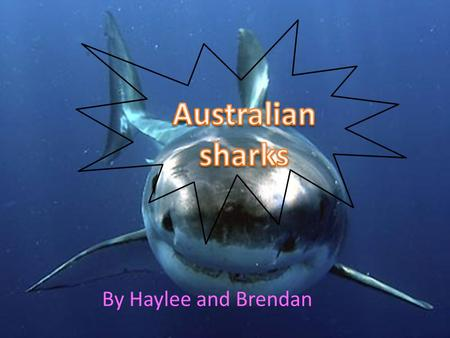 Australian sharks By Haylee and Brendan.