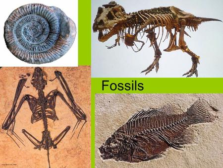 Fossils. livingFossils - the preserved remains or evidence of living things.