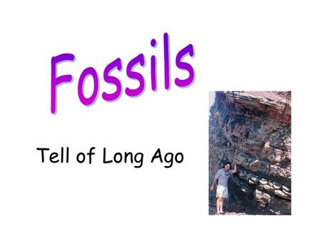 Tell of Long Ago. Fossils are animals or plants that lived a very long time ago. After they died, they turned to stone.