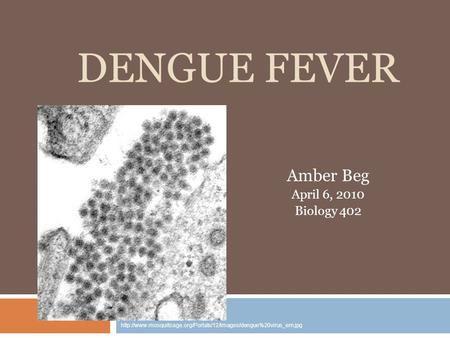 DENGUE FEVER Amber Beg April 6, 2010 Biology 402