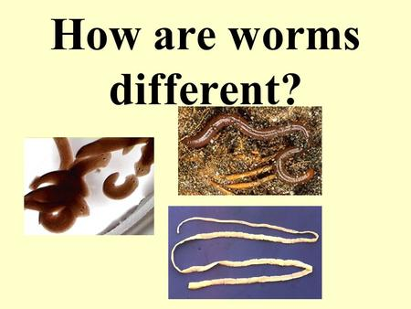 How are worms different?. 3 KINDS OF WORMS Some free living and some parasites in every group.