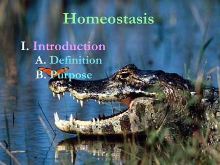 Homeostasis I. Introduction A. Definition B. Purpose.