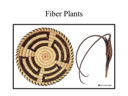 Fiber Plants. Vascular Cells Cellulose Fibers Plant Fibers The cell wall of the fiber cells – which is what gives them their properties of strength.