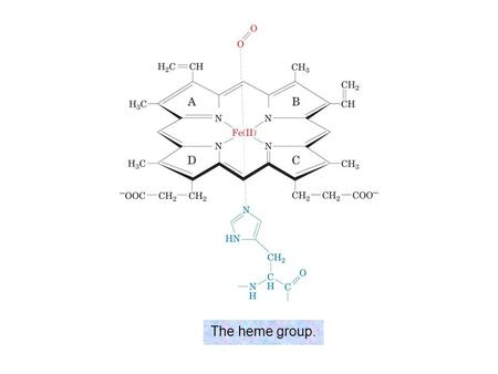 The heme group..