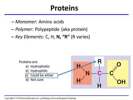 functions of amino acids pdf