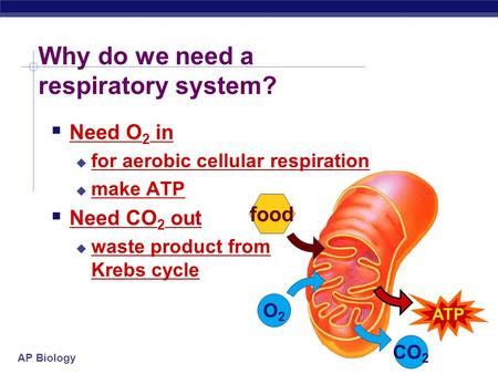 AP Biology Why do we need a respiratory system? O2O2 food ATP CO 2  Need O 2 in  for aerobic cellular respiration  make ATP  Need CO 2 out  waste.