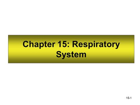 Chapter 15: Respiratory System